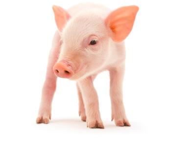 instalaciones-porcinas-erra